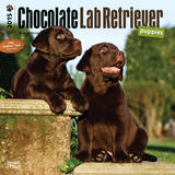 Chocolate Labrador Retriever Puppies - 2015 Calendar Calendars