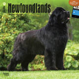 Newfoundlands - 2015 Calendar Calendars