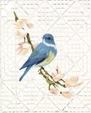 Song Bird & Trellis Posters par Colleen Sarah