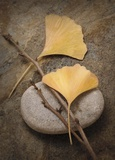 Ginko Leaf Serenity 1 Prints by Julie Greenwood