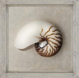 Picture Perfect Nautilus Posters by Julie Greenwood