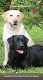 Labrador Retrievers - 2015 Pocket Planner Calendars