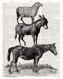 Animal Ride Horse Posters par Christopher James