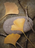 Ginko Leaf Serenity 2 Poster by Julie Greenwood