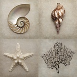 Natural Ocean Collection 1 Posters by Julie Greenwood