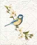Trellis Bluebird Affiche par Colleen Sarah