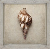 Picture Perfect Shell Poster by Julie Greenwood