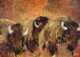 Buffalo Roam Poster by  Sokol-Hohne