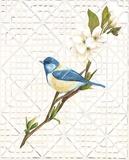 Bluebird & Trellis Affiches par Colleen Sarah
