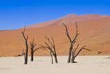 Dead Vlei, Sossusvlei, Namib Desert, Namib Naukluft Park, Namibia. Photographic Print by Nico Tondini