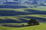 Farmland near Waitahuna, Otago, South Island, New Zealand. Photographic Print by David Wall