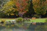 Autumn Color in Hagley Park, Christchurch, Canterbury, New Zealand. Photographic Print by David Wall