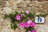 Italy, Monterigioni, Flowers Surrounding Street Address on Old Wall. Photographic Print by Terry Eggers