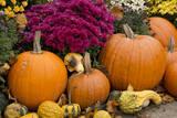 New York, Cooperstown, Farmers Museum. Decorative pumpkin display. Fotografisk tryk af Cindy Miller Hopkins