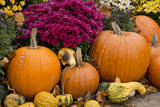 New York, Cooperstown, Farmers Museum. Decorative pumpkin display. Photographic Print by Cindy Miller Hopkins