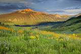 USA, Colorado, Crested Butte. Landscape of wildflowers and mountain. Photographic Print by Dennis Flaherty