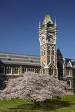Clock Tower at the University of Otago, Dunedin, New Zealand. Photographic Print by David Wall