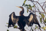 USA, Florida, Everglades NP. An anhinga in tree drying its feathers. Photographic Print by Wendy Kaveney