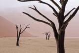 Rainy weather in early morning, Deadvlei, Namib-Naukluft Park, Namibia Photographic Print by Wendy Kaveney