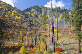 USA, Washington, Wenatchee National Forest, Tumwater Canyon in fall. Photographic Print by Jamie & Judy Wild