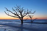 USA, South Carolina, Edisto Island, Botany Bay, Boneyard Beach Dawn. Photographic Print by Rob Tilley