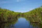 Channel through papyrus reeds, Okavango Delta, Botswana, Africa Photographic Print by David Wall
