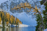 Blue Lake with larch trees, Wenatchee National Forest, Washington, USA Photographic Print by Jamie & Judy Wild