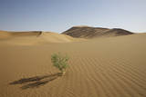China, Gansu Province. Lone plant casts shadow on Badain Jaran Desert. Photographic Print by Josh Anon