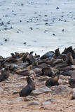 Cape Fur seals, Cape Cross, Skeleton Coast, Kaokoland, Namibia. Photographic Print by Nico Tondini