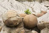 USA, North Dakota, Theodore Roosevelt NP, Cannonball Concretions. Photographic Print by Jamie & Judy Wild