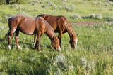 USA, North Dakota, Theodore Roosevelt National Park, Wild horses. Photographic Print by Jamie & Judy Wild