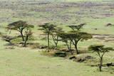 The Bush, Maasai Mara National Reserve, Kenya Photographic Print by Nico Tondini