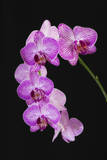USA, Georgia, Savannah, cluster of orchids. Photographic Print by Joanne Wells