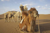 Caravan camels in the Badain Jaran Desert, Inner Mongolia, China Photographic Print by Ellen Anon