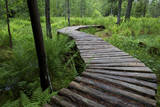 Canada, New Brunswick, Shampers Bluff. Log walkway in forest. Photographic Print by Ellen Anon