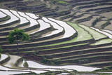 Rice terraces, Yuanyang, Yunnan Province, China. Photographic Print by Josh Anon