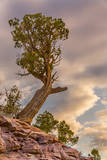 USA, Colorado, Fruita. Juniper tree in Colorado National Monument. Photographic Print by Fred Lord