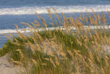 Sea Oats on a Sand Dune overlooking the Atlantic Ocean, North Carolina Photographic Print by Charles Cecil