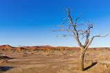 Sossusvlei, Namib Desert, Namib-Naukluft National Park, Namibia. Photographic Print by Nico Tondini