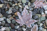 US, WA, Bainbridge Island. Frost patterns on vegetation. Photographic Print by Trish Drury
