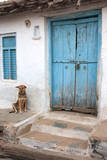 Dog resting outside a house, Jojawar, Rajasthan, India. Photographic Print by Inger Hogstrom