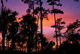 USA, Florida, Big Cypress National Preserve Adams camp sunset. Photographic Print by Connie Bransilver