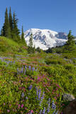 USA, Washington, Mount Rainier National Park, Summer wildflowers. Photographic Print by Jamie & Judy Wild