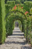 Archway of trees in the gardens of the Alhambra, Granada, Spain. Photographic Print by Julie Eggers