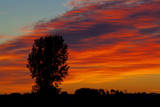 Canada, Manitoba, Portage La Prairie. Tree and clouds at sunrise. Photographic Print by Mike Grandmaison