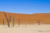 Dead Vlei, Sossusvlei, Namib Desert, Namib-Naukluft NP, Namibia. Photographic Print by Nico Tondini