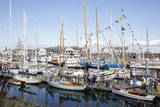 USA, Washington State, Port Townsend, Wooden Boat Festival. Photographic Print by Savanah Stewart