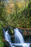 Leaves scattered along Gorton Creek, Columbia Gorge, Oregon, USA Photographic Print by Chuck Haney