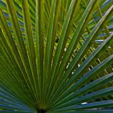 Bacab Eco Park, Belize City, Belize. Photographic Print by Joe Restuccia III