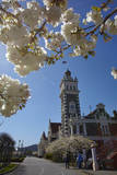 Spring Blossom and Railway Station, Dunedin, South Island, New Zealand Photographic Print by David Wall